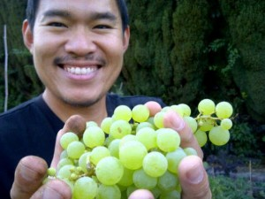 Francis and Grapes