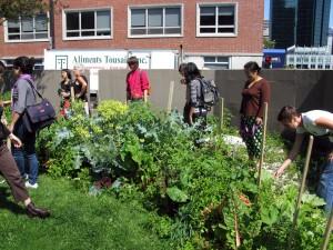 Jardin biologique #8-potager de resistance